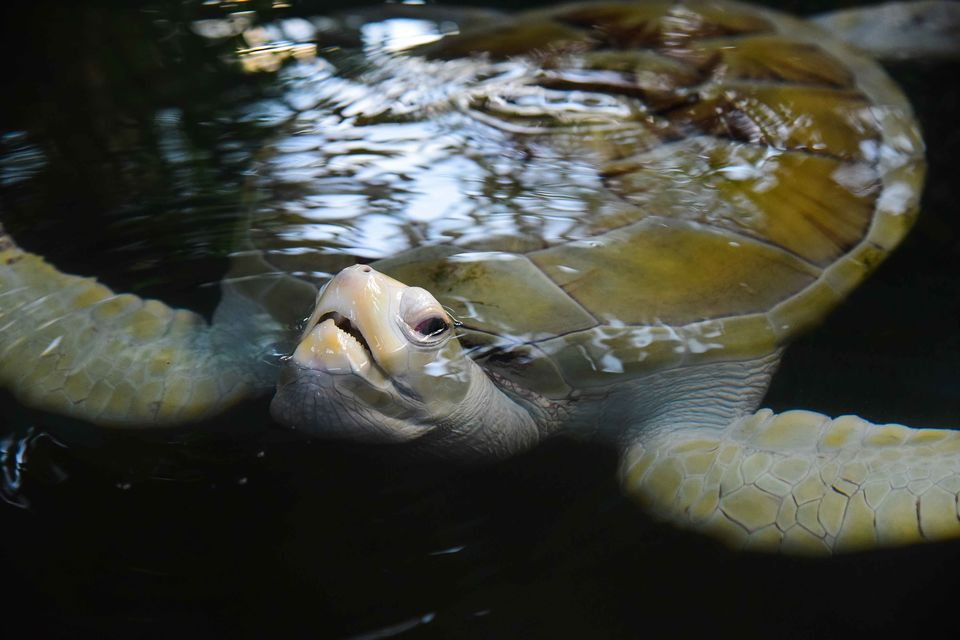 Photos of An evening atInduruwa Turtle Hatchery, Sri Lanka 1/1 by Shanta TS