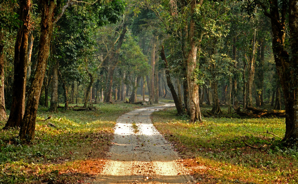 Photos of The majestic Gorumara National Park – a gem in the East 1/1 by Saikat Mazumdar