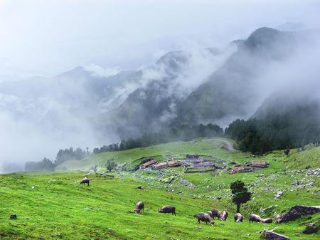 Photo of An guide to the spectacular chopta - chandrashila trek
