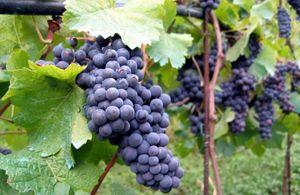 Alpine winery 1/1 by Tripoto