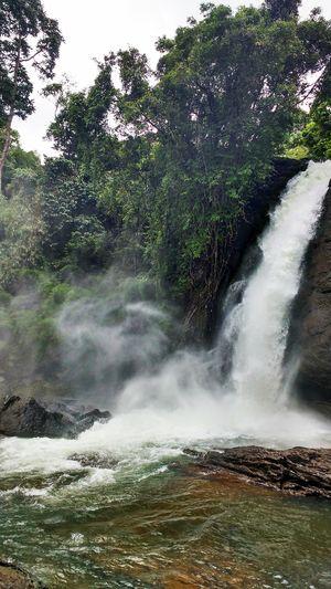 Rejuvenating trip to Wayanad (Kerela)