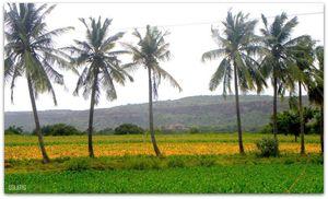 Trip to the era of Vijayanagara & Chalukyas