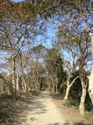 Kaziranga - In search of the one horned Rhino