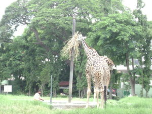 Mysore Zoo DZ 1/27 by Tripoto