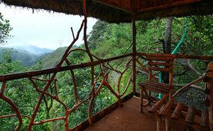 Vanya Tree House 1/1 by Tripoto
