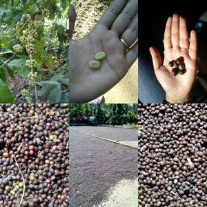Coorg for the Coffeeholics