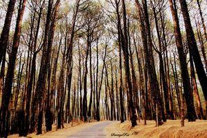 Palampur-The perfect weekend getaway!