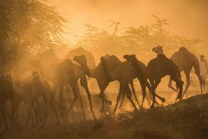 Pushkar Camel Fair: Part 1 - The Photo Story