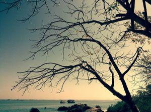 From Madagascar with Love: Malpe's Island Quartet
