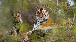 Wildlife Photography in Bandhavgarh