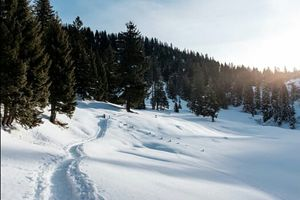 5 Reasons to visit Kashmir in Winters