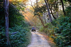 Sign This Petition To Stop The Construction Of A Highway Through Jim Corbett National Park