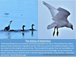 The Emperor Avians of Antarctica