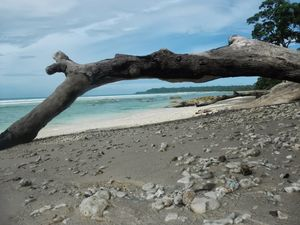 Neil Island: Back To Basics