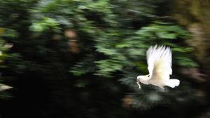Jurong Bird Park 1/53 by Tripoto