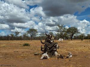 Camping Under African Skies
