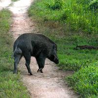Kaziranga National Park 3/119 by Tripoto