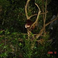 Night Safari Singapore 5/11 by Tripoto